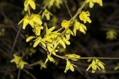Flor amarilla en la noche foto de archivo