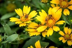 Flor amarilla en las hojas verdes Foto de archivo libre de regalías