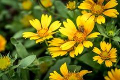 Flor amarilla en las hojas verdes Imágenes de archivo libres de regalías
