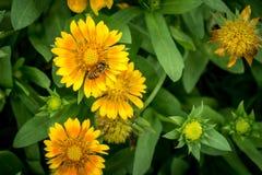 Flor amarilla en las hojas verdes Fotografía de archivo libre de regalías
