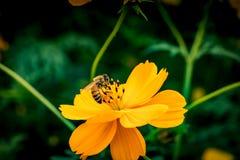 Flor amarilla en las hojas verdes Imagen de archivo