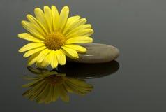 Flor amarilla en las rocas foto de archivo
