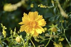 Flor amarilla en medio de un arbusto Imagen de archivo