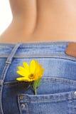 Flor amarilla en pantalones vaqueros de una hembra del bolsillo Fotos de archivo