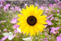 Flor amarilla en un jardín Fotos de archivo