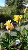 Flor amarilla en un parque floral Foto de archivo libre de regalías