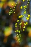 Flor amarilla en verano Fotografía de archivo libre de regalías