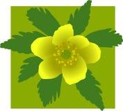 Flor amarilla en verde ilustración del vector