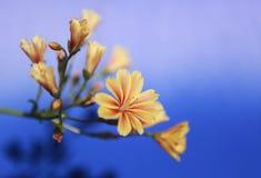 Flor amarilla enfocada con la transición borrosa del cielo Imagen de archivo