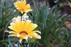 Flor amarilla fascinante con el fondo del bosque imagen de archivo