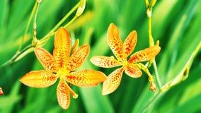 Flor amarilla Flor hermosa imágenes de archivo libres de regalías