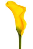 Flor amarilla hermosa Foto de archivo
