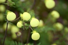 Flor amarilla hermosa Fotografía de archivo libre de regalías