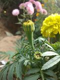 Flor amarilla hermosa Imágenes de archivo libres de regalías
