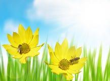 Flor amarilla hermosa con la abeja Foto de archivo libre de regalías