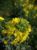 Flor amarilla hermosa imagen de archivo