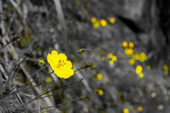 Flor amarilla hermosa está después de corrige foto de archivo
