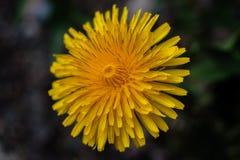 Flor amarilla - macro fotos de archivo