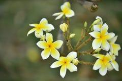 Flor amarilla o flor amarilla Imagen de archivo