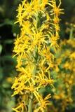 Flor amarilla oscura Imágenes de archivo libres de regalías