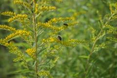 Flor amarilla oscura, jardín del verano Fotografía de archivo libre de regalías