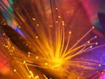 Flor amarilla que brilla intensamente de la hada hermosa Imágenes de archivo libres de regalías