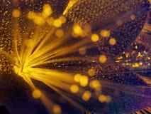 Flor amarilla que brilla intensamente de la hada hermosa Fotos de archivo