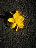 Flor amarilla que miente en la tierra Fotos de archivo