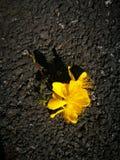 Flor amarilla que miente en la tierra Foto de archivo libre de regalías