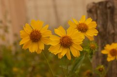Flor amarilla soleada Imagen de archivo
