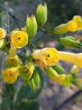 Flor amarilla verde con forma única imágenes de archivo libres de regalías