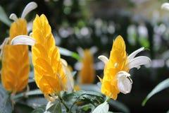 Flor amarilla y blanca en el jardín fotos de archivo libres de regalías