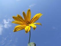 Flor amarilla y cielo azul Imagen de archivo libre de regalías