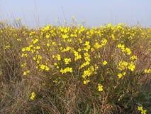 Flor amarilla y cielo azul fotos de archivo libres de regalías