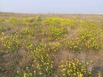 Flor amarilla y cielo azul foto de archivo