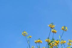 Flor amarilla y cielo azul Imagen de archivo