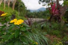 Flor amarilla y manera Imagenes de archivo