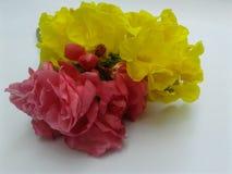 Flor amarilla y rosada imagen de archivo