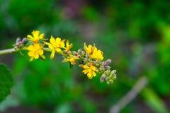 Flor amarilla y rosada del color con el fondo de la falta de definición foto de archivo libre de regalías