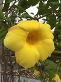 Flor amarillo Imagen de archivo libre de regalías