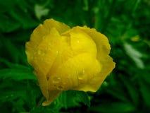Flor amarillo fotografía de archivo