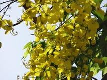 Flor amarillo Foto de archivo