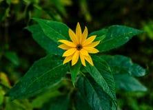 Flor amarillo Fotografía de archivo libre de regalías