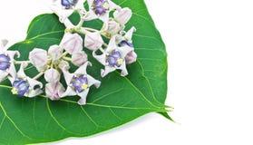 Flor & folhas Foto de Stock