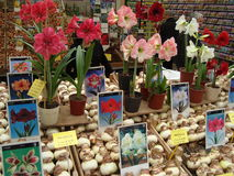 Flor Amsterdam del mercado Imágenes de archivo libres de regalías