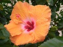 Flor anaranjada Imagen de archivo