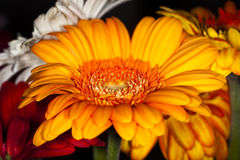 Flor anaranjada Imagenes de archivo