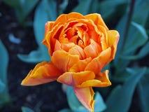 Flor anaranjada Foto de archivo libre de regalías