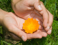 Flor anaranjada fotografía de archivo libre de regalías