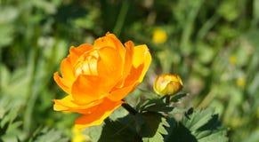 Flor anaranjada brillante Fotografía de archivo